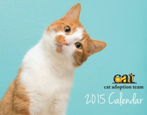 cat adoption team calender